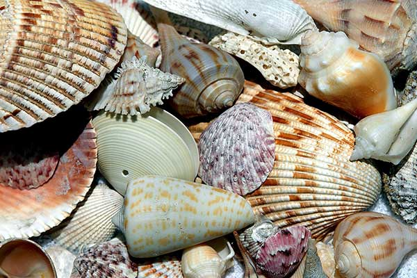 florida-sea-shells-1886613_1920.jpg