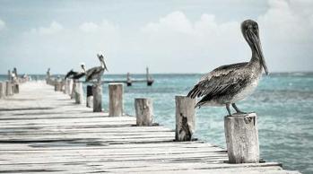 island wildlife